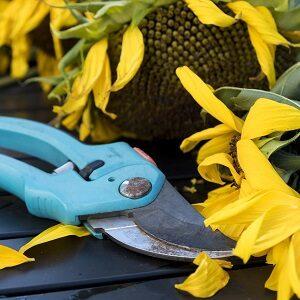Tools - Autumn Secateurs Marketing -
